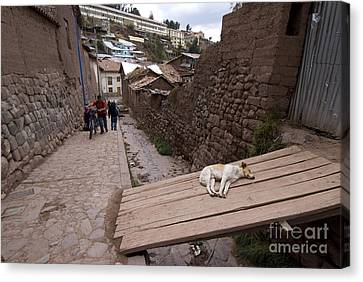 Dog Sleeping In Alley Canvas Print by William H. Mullins