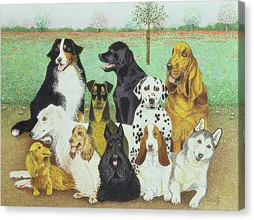 Dog Watch Canvas Print by Pat Scott