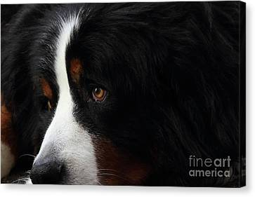 Dog Canvas Print by Wingsdomain Art and Photography