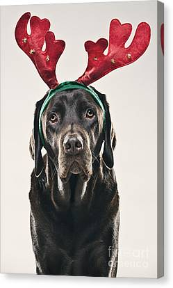 Dog With Antlers Canvas Print by Justin Paget