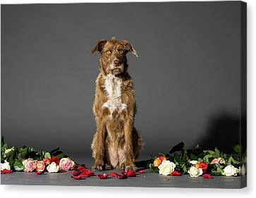 Dog With Flowers Canvas Print