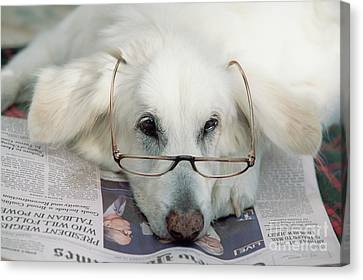 New Individuals Canvas Print - Dog And The News by Yva Momatiuk John Eastcott