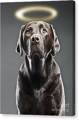 Dog With Halo Canvas Print by Justin Paget