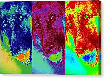 Doggy Doggy Doggy Canvas Print by Cathy Shiflett