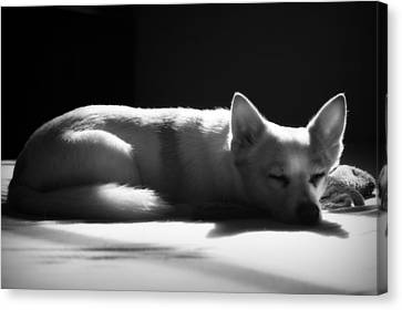 Doggy Dreamin' Canvas Print by Mandy Shupp