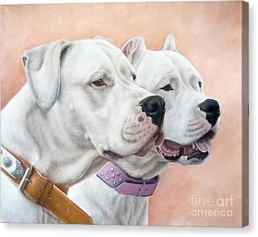 Dogo Argentino Canvas Print by Tobiasz Stefaniak