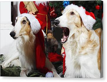 Canvas Print featuring the photograph dogs Borzoi puppies and Christmas greetings by Christian Lagereek