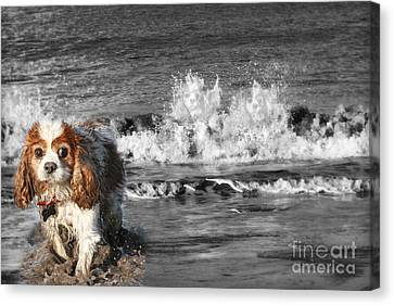 Dogs Enjoying The Sea Canvas Print by Jo Collins
