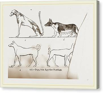 Dogs, From Egyptian Paintings Canvas Print