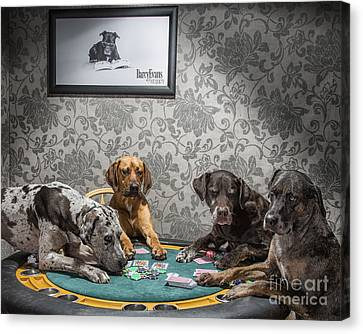 Dogs Playing Poker Canvas Print by Darcy Evans