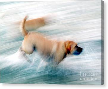 Dogs Running In Sea. Canvas Print
