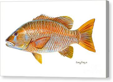 Dogtooth Snapper Canvas Print by Carey Chen