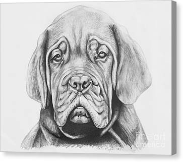 Dogue De Bordeaux Dog Canvas Print by Lena Auxier