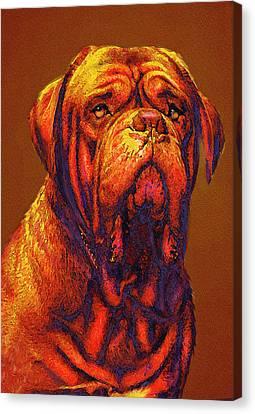 Dogue De Bordeaux Canvas Print by Jane Schnetlage