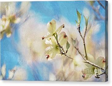 Dogwood Against Blue Sky Canvas Print by Lois Bryan
