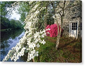 Towpath Canvas Print - Dogwood And Azalea Bloom by George Oze