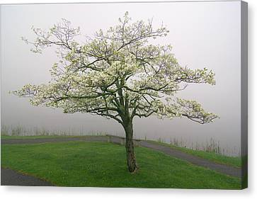 Dogwood Lake Canvas Print - Dogwood And Fog With Bench - Abbott Lake - Peaks Of Otter by Byron Spencer