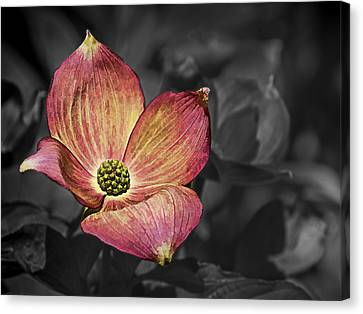 Dogwood Lake Canvas Print - Dogwood Bloom by Ron Roberts