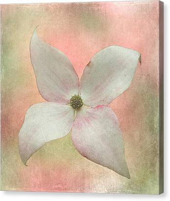 Dogwood Blossom Canvas Print by Angie Vogel