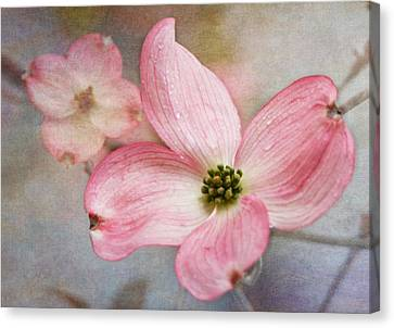 Dogwood Blossoms Canvas Print by Angie Vogel
