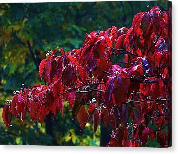 Dogwood Branch In Autumn Canvas Print by Bill Shuman