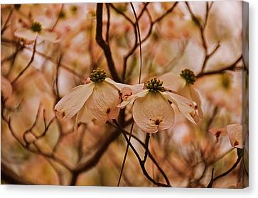Canvas Print featuring the photograph Dogwood Day Afternoon by John Harding