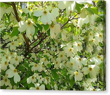 Canvas Print featuring the photograph Dogwood Kissed By The Sun by Becky Lupe