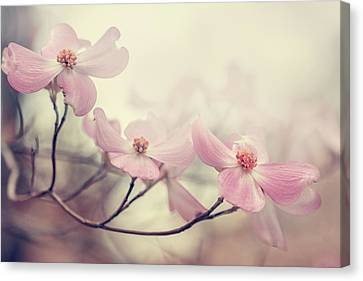 Dogwood Canvas Print by Magda  Bognar