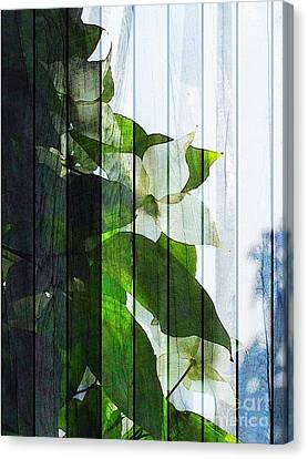 Dogwood Shades Canvas Print