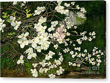 Canvas Print featuring the painting Dogwoods Virginia by Melly Terpening