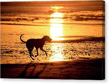 Doh At Sunset In  Silhouette Canvas Print