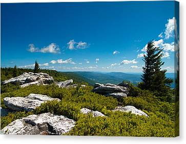 Dolly Sods Canvas Print by Shane Holsclaw