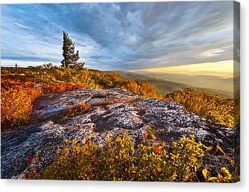 Dolly Sods Wilderness Canvas Print by Bernard Chen