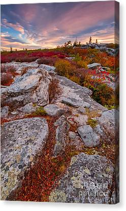 Dolly Sods Wilderness D30019841 Canvas Print by Kevin Funk
