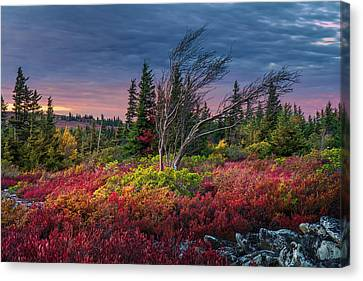 Dolly Sods Windswept Sunset Canvas Print by Mary Almond