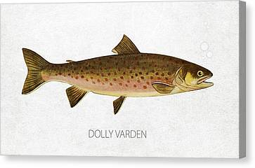 Angling Canvas Print - Dolly Varden by Aged Pixel