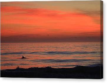 Canvas Print featuring the photograph Dolphin At Cape Hatteras by Mountains to the Sea Photo
