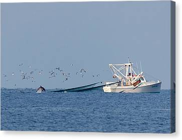 Dolphin Chase Canvas Print by Alan Raasch