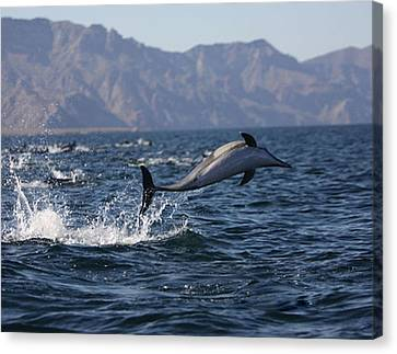 Canvas Print featuring the photograph Dolphin Dance by Kandy Hurley
