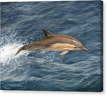 Whale Canvas Print - Dolphin by David Stribbling