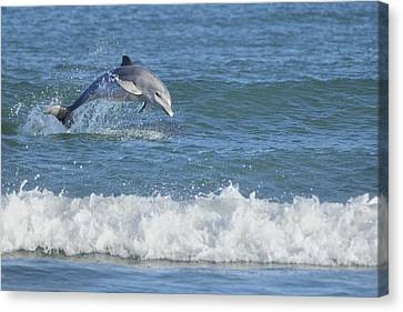 Dolphin In Surf Canvas Print by Bradford Martin