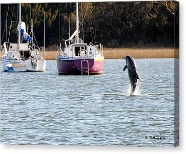 Dolphin In Taylors Creek Canvas Print by Dan Williams