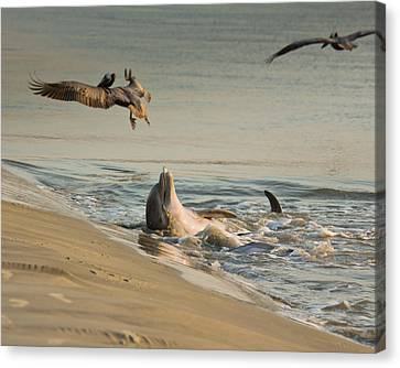 Canvas Print featuring the photograph Dolphin Joy by Patricia Schaefer