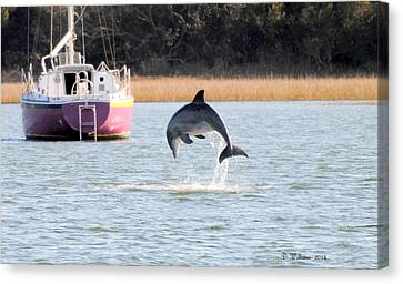 Dolphin Jumping In Taylors Creek Canvas Print by Dan Williams