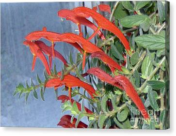 Canvas Print featuring the photograph Dolphin Plant by Brenda Brown