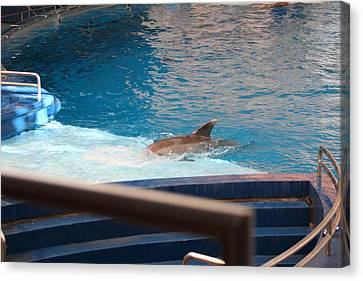 Dolphin Show - National Aquarium In Baltimore Md - 1212103 Canvas Print by DC Photographer