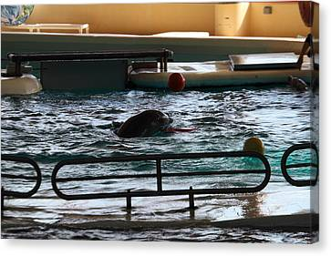 Dolphin Show - National Aquarium In Baltimore Md - 1212112 Canvas Print by DC Photographer