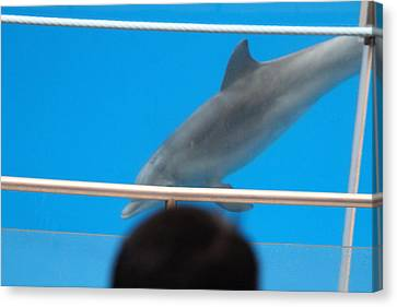 Dolphin Canvas Print - Dolphin Show - National Aquarium In Baltimore Md - 121212 by DC Photographer