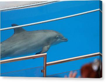 Dolphin Show - National Aquarium In Baltimore Md - 1212121 Canvas Print by DC Photographer