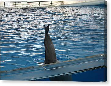 Dolphin Show - National Aquarium In Baltimore Md - 1212127 Canvas Print by DC Photographer